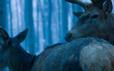 Ismét magyar filmet jelöltek Oscar-díjra